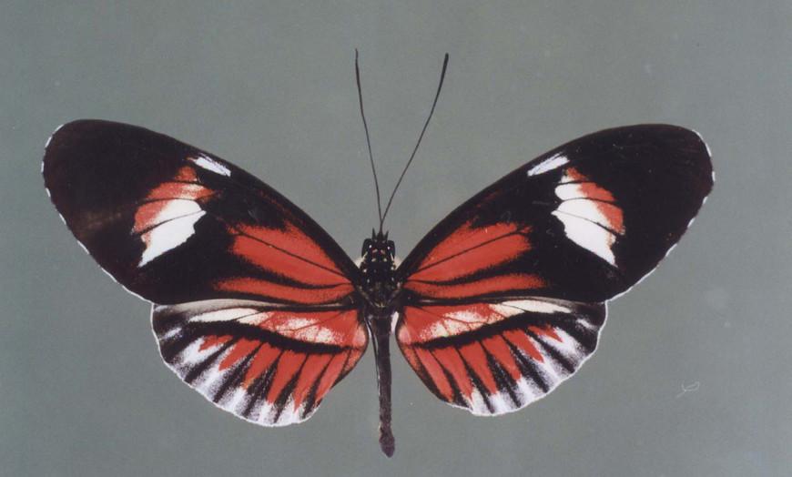 4玛尔塔:helliconius