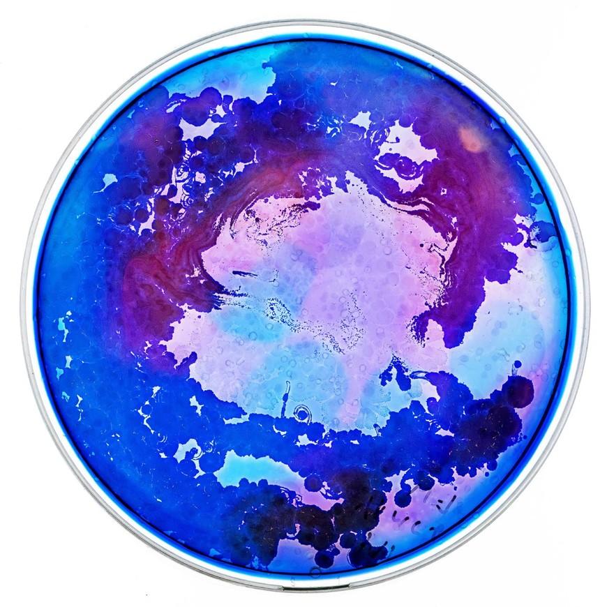 5塔尔·丹尼诺:微观宇宙